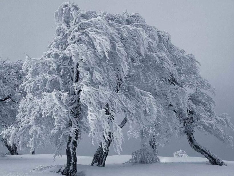 Inverno con freddo eccezionale fa aumentare prezzi del PVA